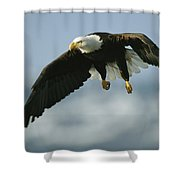 An American Bald Eagle In Flight Shower Curtain
