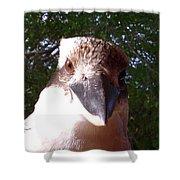 Australia - Kookaburra Stickybeak Shower Curtain
