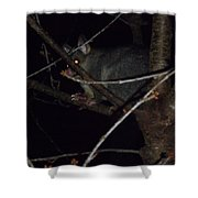 Australian Native Animals Shower Curtain