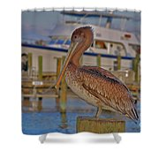 8- Brown Pelican Shower Curtain