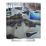 Centro De Investigaciones Paleontologicas Shower Curtain