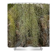Coba Shower Curtain