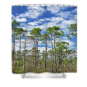 8- Cypress Sky Shower Curtain