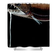 Deep Sea Dragonfish Shower Curtain