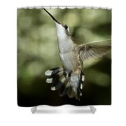 Female Ruby-throated Hummingbird Shower Curtain