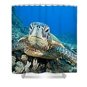 Hawaii, Green Sea Turtle Shower Curtain