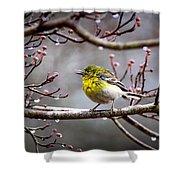 Img_0001 - Pine Warbler Shower Curtain