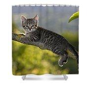 Kitten In A Tree Shower Curtain