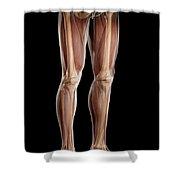 Leg Musculature Shower Curtain