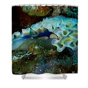 Lettuce Sea Slug Shower Curtain