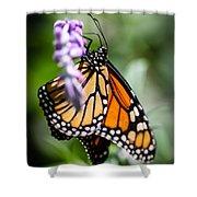 Monarch Danaus Plexippus Shower Curtain