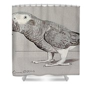 Timneh Grey Parrot Shower Curtain