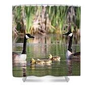 8132 - Canada Goose Shower Curtain