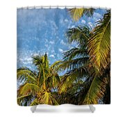 8167- Palm Tree Shower Curtain