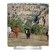 8188 Shower Curtain