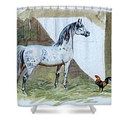 #84 - The Gray And The Rooster Shower Curtain