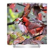 8627-002 - Northern Cardinal Shower Curtain