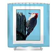 #8671 Woodpecker Shower Curtain