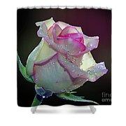 Nice Rose Shower Curtain