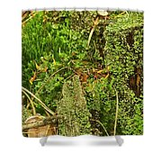 Mosses And Liverworts 8861 Shower Curtain