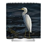 89- Snowy Egret Shower Curtain