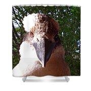 Australia - Kookaburra I'm Looking At You Shower Curtain