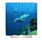 Bottlenose Dolphin Tursiops Truncatus Shower Curtain
