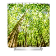 cypress forest and swamp of Congaree National Park in South Caro Shower Curtain