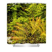 Fall Color Fern Shower Curtain