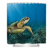 Green Sea Turtle Shower Curtain