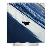 Bird On A Beach  Shower Curtain