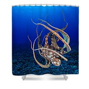 Hawaii, Day Octopus Shower Curtain