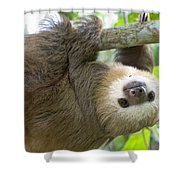Hoffmanns Two-toed Sloth Choloepus Shower Curtain