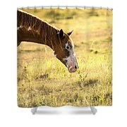 Horse In The Countryside  Shower Curtain