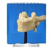 Human Vertebra Shower Curtain