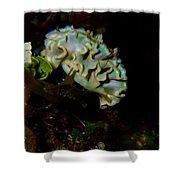 Lettuce Sea Slug Shower Curtain