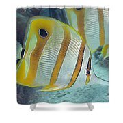 Malaysia Marine Life Shower Curtain