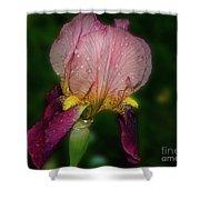 Nice Iris Shower Curtain
