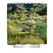 Saguaro Cactus Carnegiea Gigantea Shower Curtain