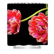 Tulip Floral Arrangement Shower Curtain
