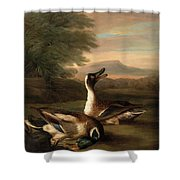 Two Drakes In Landscape Shower Curtain