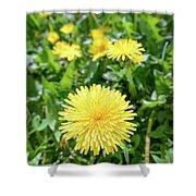 Yellow Dandelion Flowers Shower Curtain