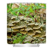 Polypores 9155 Shower Curtain