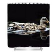 9246 Female Mallard Shower Curtain