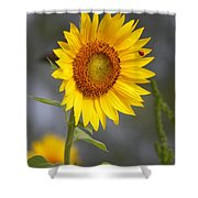 #933 D958 Best Of Friends Colby Farm Sunflowers Newbury Massachusetts Shower Curtain
