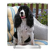 #940 D1034 Farmer Browns Springer Spaniel Shower Curtain