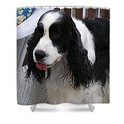 #940 D1039 Farmer Browns Springer Spaniel Fresh Shower Curtain