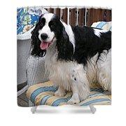 #940 D1040 Farmer Browns Springer Spaniel Cute Shower Curtain