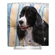 #940 D1043  Farmer Browns Springer Spaniel Smile Hidden Heart Shower Curtain