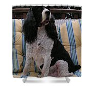 #940 D1045  Farmer Browns Springer Spaniel Shower Curtain